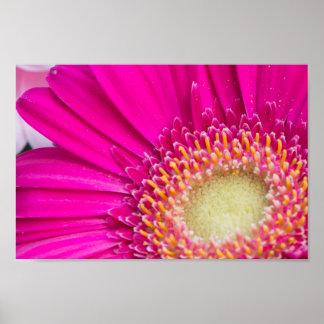 Hot Pink Fuschia Flower Photo Art Poster Print