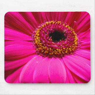 hot pink gerber daisy mouse pads