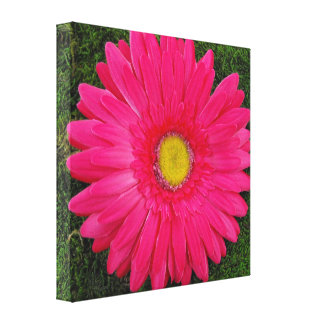 Hot Pink Gerbera Daisy on Green Moss Stretched Canvas Print