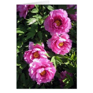 Hot Pink Group Peonies Card