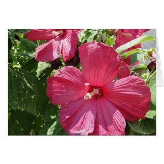 Hot Pink Hibiscus, Friend Card