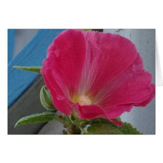 Hot Pink Hollyhock Blue Greeting Card