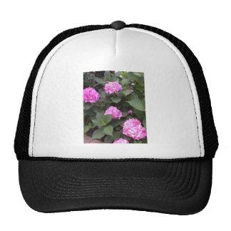 Hot Pink Hydrangea Cap