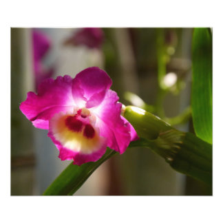 Hot Pink Orchid Print