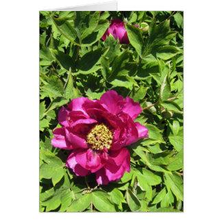 Hot Pink Peonie Card