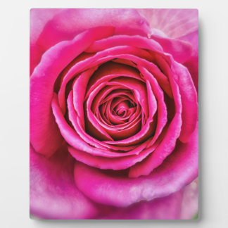 Hot Pink Rose Display Plaques