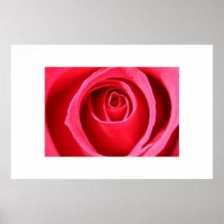 Hot Pink Rose Poster