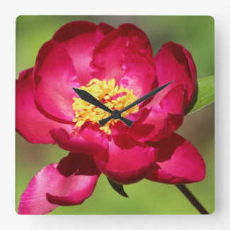 Hot Pink Trend Wall Clock