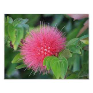Hot Pink Wildflower Themed Poster