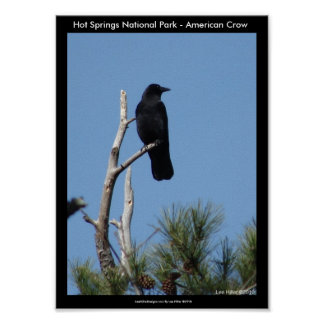 Hot Springs National Park, AR - American Crow Poster