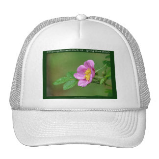 Hot Springs National Park, AR  Wild Rose Gifts Mesh Hat