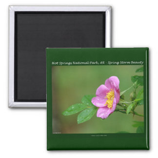 Hot Springs National Park, AR  Wild Rose Gifts Square Magnet