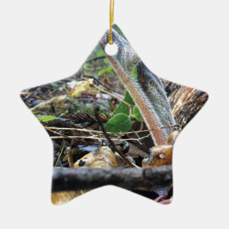 Hound's Tongue Sproutling Ceramic Ornament