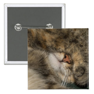 House cat covering eyes while sleeping 15 cm square badge