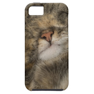House cat covering eyes while sleeping case for the iPhone 5