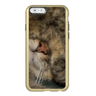 House cat covering eyes while sleeping incipio feather® shine iPhone 6 case
