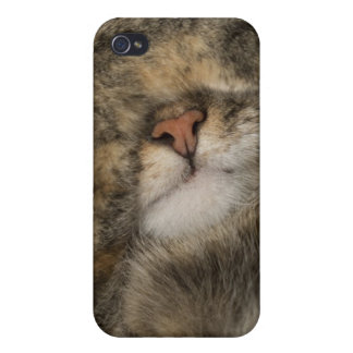 House cat covering eyes while sleeping iPhone 4/4S cases