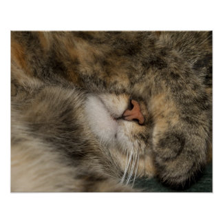 House cat covering eyes while sleeping poster