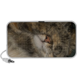 House cat covering eyes while sleeping travel speakers
