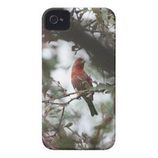 House Finch Case-Mate iPhone 4 Cases