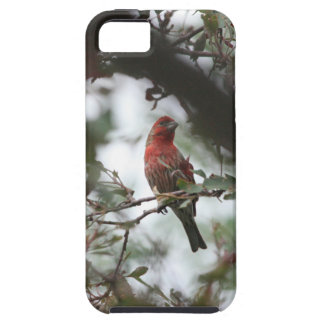 House Finch iPhone 5/5S Case