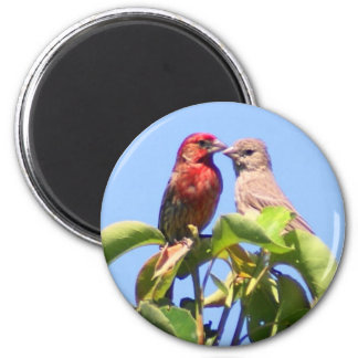 House Finch Couple Magnet