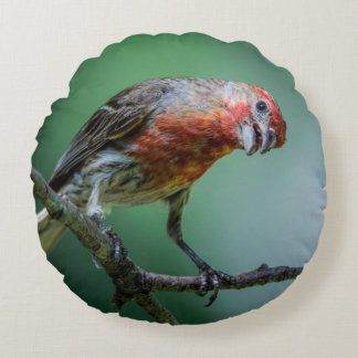 House Finch Home Decor and Accessories Round Cushion