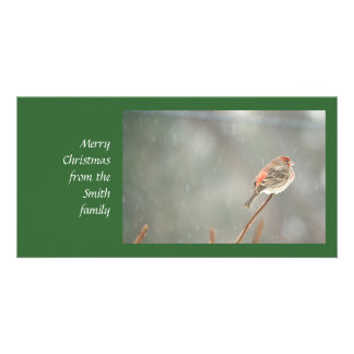 House Finch on a Branch Photo Card Template