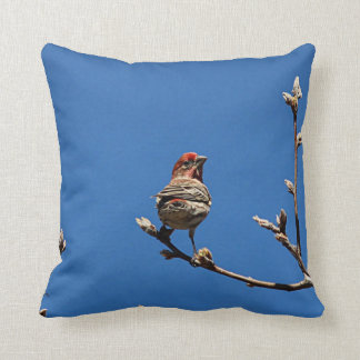 House finch on a spring day cushion