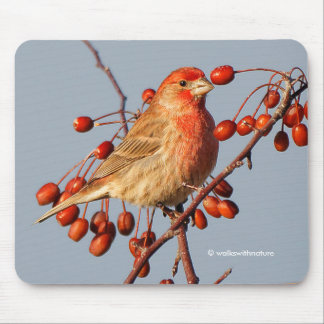House Finch with Hawthorn Berries Mouse Pad