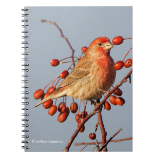House Finch with Hawthorn Berries Notebook