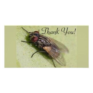 House Fly Custom Photo Card