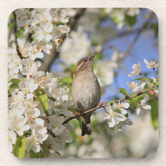 House sparrow and spring blossoms coaster