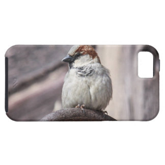 House Sparrow iPhone 5 Covers