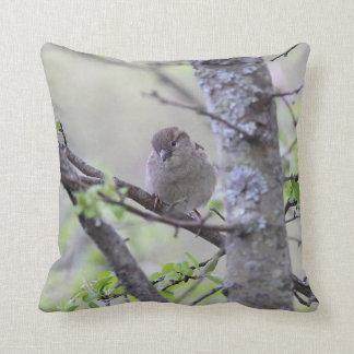 House sparrow cushion