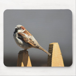 House Sparrow Mouse Pad
