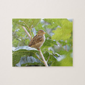 House sparrow perched jigsaw puzzle
