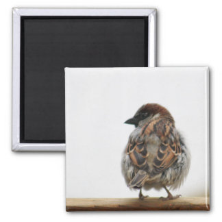 House sparrow photography square magnet