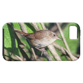 House Wren iPhone 5 Cover