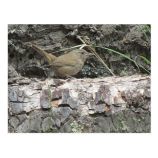 House Wren Postcard