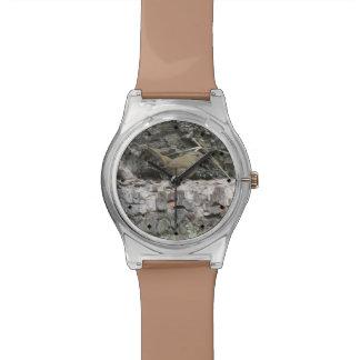 House Wren Watch