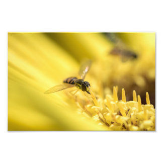 HOVERFLY ON A DAISY by Michelle Diehl Photo Art