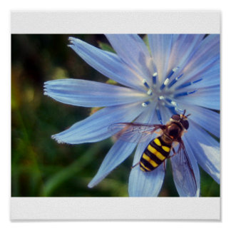 hoverfly on blue poster