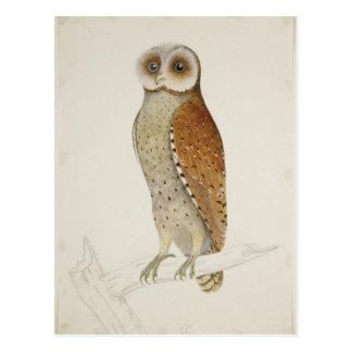 How now Bay Owl? Postcard