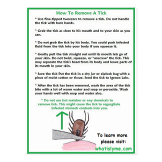 How to Remove a Tick Instructions Card for Lyme Postcard