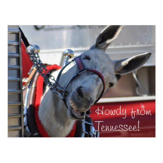 Howdy from Tennessee Mule Postcard