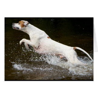 Howgillhounds cards Pointer