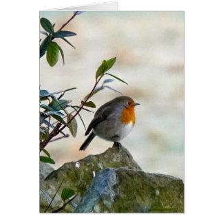 Howgillhounds Robin Greeting Card