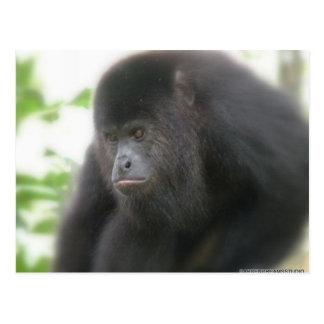 Howler Monkey in Belize Postcard