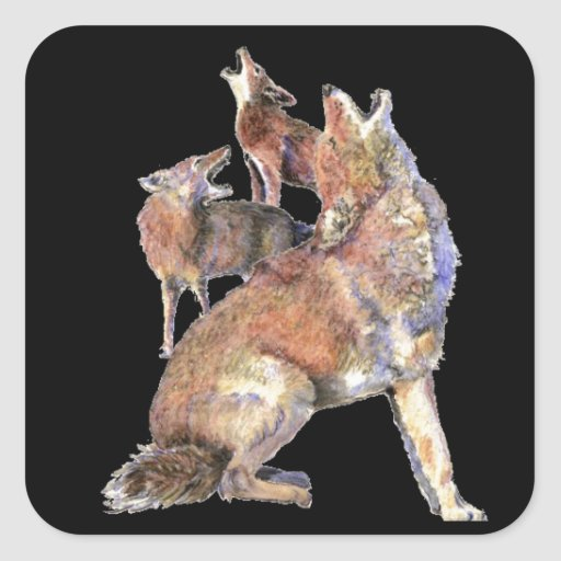 Howling Coyote Pack, Animal, Nature  Wildlife Square Stickers